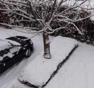 Schnee-Eis- Winterdienst